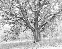 Old Oak, Appleton, WI